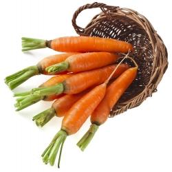 Marchew Karotela - wczesna - 4250 nasion