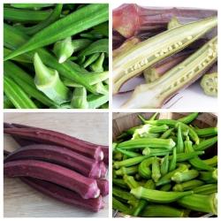 Okra, Ketmia jadalna - zestaw 2 odmian nasion warzyw