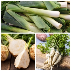 Pietruszka, por, seler - zestaw 3 gatunków nasion warzyw