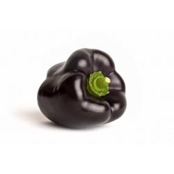 Papryka słodka Zulu - czarna, typu blok, do uprawy w gruncie