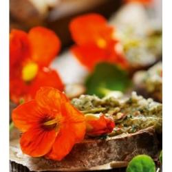 Kwiaty Jadalne - Nasturcja Tom Thumb - mieszanka kolorów