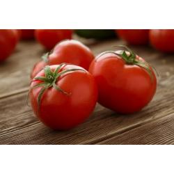 Pomidor gruntowy karłowy Bohun - bardzo wczesny, duże owoce!
