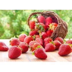 Truskawka Elegance - o dużych i trwałych owocach - 20 sadzonek