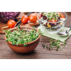 BIO Nasiona na kiełki -  Rzodkiew Daikon - certyfikowane nasiona ekologiczne