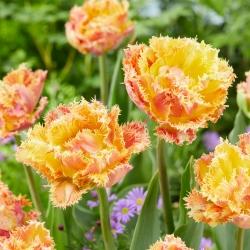 Tulipan pełny strzępiasty Esprite - 5 cebulek