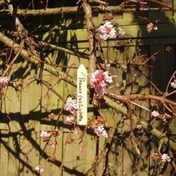 Etykiety drewniane, wiszące - 10 cm - 15 szt.