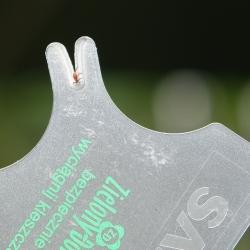 Wyciągacz kleszczy w formie karty - zawsze pod ręką - dla ludzi i zwierząt - Zielony Dom