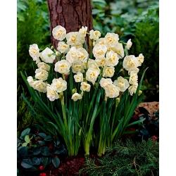 Narcyz pachnący Bridal Crown - 5 cebulek