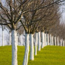 Wapno do bielenia drzew i krzewów - Dolpol - 2 kg