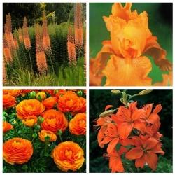 Kompozycja pomarańczowa - zestaw 4 gatunków roślin - 32 szt.