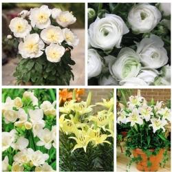 Zestaw roślin do uprawy w doniczkach - kolor biały i kremowy - 5 odmian