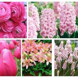 Zestaw kwiatów w kolorze różowym - 5 gatunków