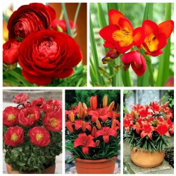 Zestaw roślin do uprawy w doniczkach - kolor czerwony - 5 odmian
