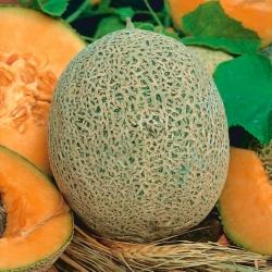 Melon Emir F1 - 18 nasion
