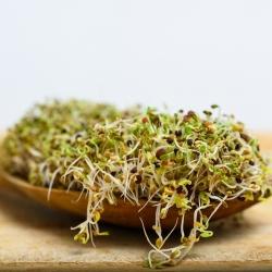 BIO Nasiona na kiełki -  Brokuł Raab - certyfikowane nasiona ekologiczne