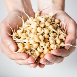 BIO Nasiona na kiełki -  Cieciorka - certyfikowane nasiona ekologiczne