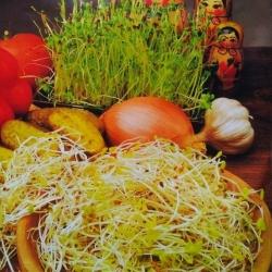 Nasiona na kiełki - mieszanka rosyjska