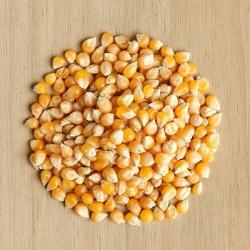 Nasiona na kiełki - Kukurydza