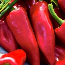Papryka słodka Wika - czerwona, polecana do uprawy w tunelach lub gruncie