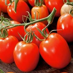 Pomidor gruntowy karłowy Granit - średniopóźny, twarde owoce