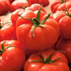 Pomidor gruntowy karłowy Jutrosz - wczesny, bardzo plenny, doskonały na soki