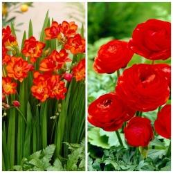 Red Harmony - zestaw 2 gatunków roślin w kolorze czerwonym - 100 szt.