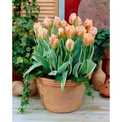Tulipan China Town - opak. 5 szt.