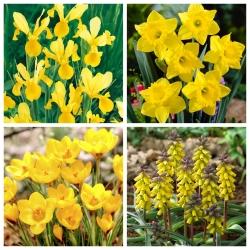 Gold rush - zestaw 4 gatunków roślin - 56 szt.