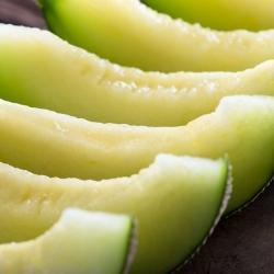 Melon Seledyn F1 - 30 nasion