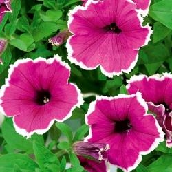 Petunia ogrodowa Iluzja - różowa - 400 nasion