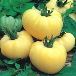 Pomidor White Beauty - gruntowy, biały