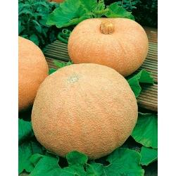 Dynia olbrzymia melonowa żółta - 12 nasiona