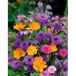 Pachnące kwiaty - Mieszanka roślin jednorocznych o pachnących kwiatach - 120 nasion
