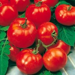 Pomidor Beta
