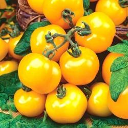 Pomidor Ola Polka - gruntowy - 500 nasion