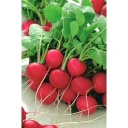 Rzodkiewka Cherry Belle - NASIONA ZAPRAWIANE