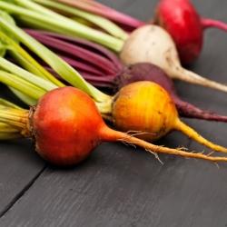 Mieszanka kolorowych odmian buraka ćwikłowego – nasiona otoczkowane - 100 nasion