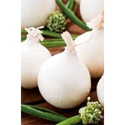 Cebula Agostana - biała, średnio wczesna - 1250 nasion