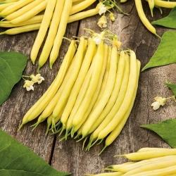 Fasola szparagowa żółta wczesna Erla