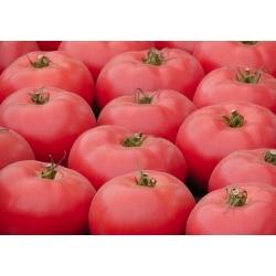 Pomidor Bawole Serce Oxheart - NASIONA ZAPRAWIANE