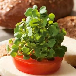 Microgreens - Jarmuż zielony - młode listki o unikalnym smaku - 900 nasion