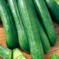 Ogórek sałatkowy - Tessa - idealny na mizerię lub knapkę! - 105 nasion