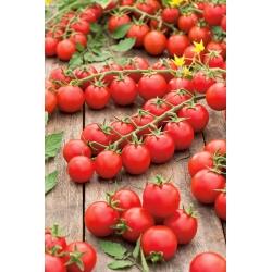 Pomidor Cherrola - koktajlowy - 20 nasion
