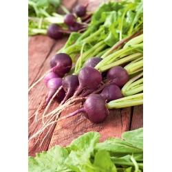 Rzodkiewka fioletowa - Malaga - 425 nasion