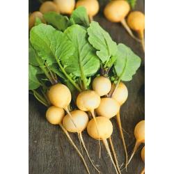 Rzodkiewka żółta - Zlata - 425 nasion