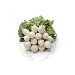Rzodkiewka Afrodyta - biała, błyszcząca, gładka skórka - 425 nasion