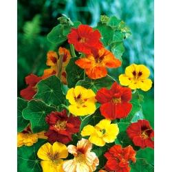 BIO Nasturcja wysoka - mieszanka kolorów - certyfikowane nasiona ekologiczne