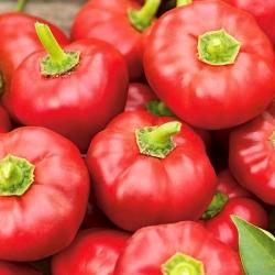 Papryka Alexander - gruntowa i tunelowa, ciemnoczerwona, typu pomidorowego - 65 nasion