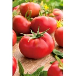 Pomidor Hubal - gruntowy, doskonały na przetwory