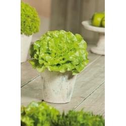 Mini ogród - Sałata na cięte listki - zielona, gładka - do uprawy na balkonach i tarasach